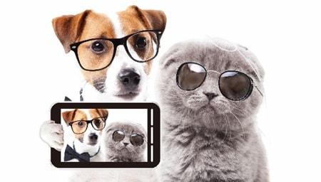犬と猫はカンピロバクター菌の保有率が50%近くある